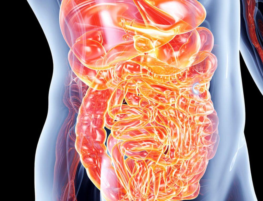 El intestino, tu segundo cerebro: conoce la importancia de mantenerlo saludable